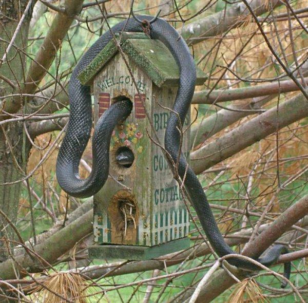 97c551488dd2cd8e7ff5a5bb7ae86b1a-snake-in-bird-house