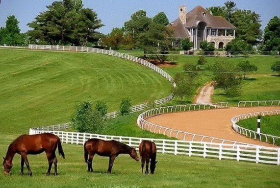 pictures_of_kentucky_horse_farms_3766