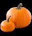 Pumpkin-Image-3